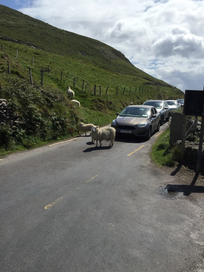 Typical Irish Traffic Jam