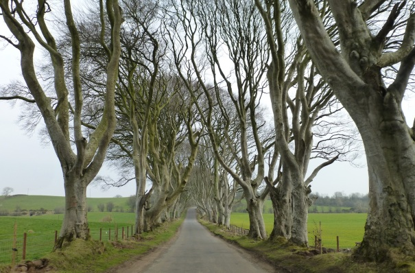 Northern Ireland Game of Thrones Filming Locations : The Dark Hedges : The King's Road
